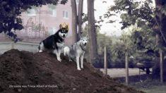 A última jornada do cachorro Kodiak