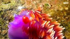 Essas criaturas marinhas coloridas e exóticas são incríveis. Confira!