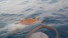 Tartaruga presa na rede de pesca é salva por dupla em caiaque