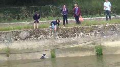 Cachorro se afogando num rio de Londres luta para sobreviver e é salvo por remadores