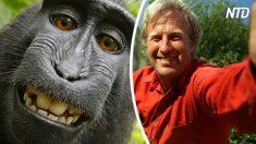 Macaco tira fotos 'selfie' com câmera de fotógrafo, mas de quem são os direitos autorais?