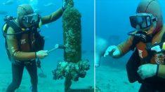 Mergulhador japonês golpeia sino no fundo do mar e momentos depois seu 'amigo' aparece