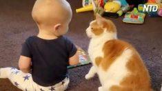 Esses gatos amam seus amigos bebês. É adorável!