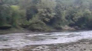 Ciclista salva cachorro amarrado dentro de um rio