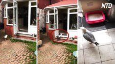 Homem flagra gaivota dentro de sua cozinha, mas o que ela faz dentro de casa é inacreditável