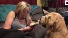 Cachorro não deixa dona usar celular pois quer atenção