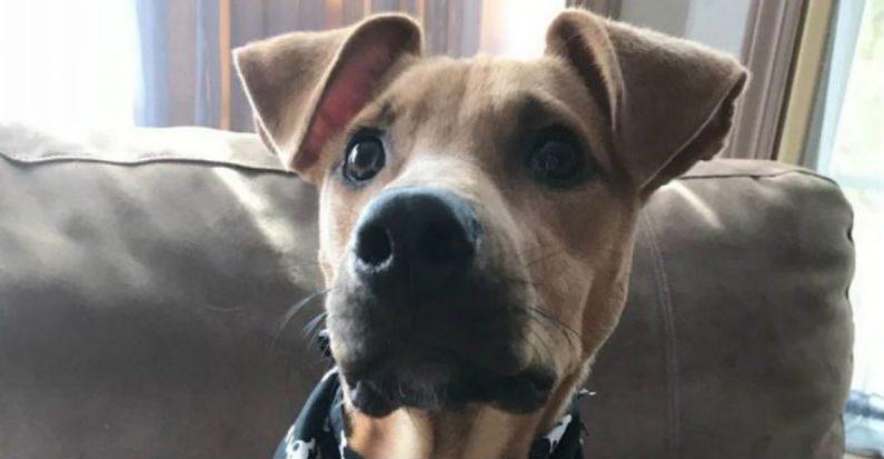 Adolescente de férias vê cachorro abandonado e faminto, ela insiste em trazê-lo para sua casa nos EUA