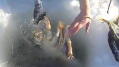 Pescadores capturam caranguejos enormes debaixo do gelo