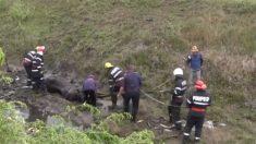 Cavalo em apuros é resgatado por bombeiros