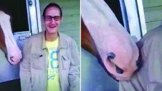 Homem tenta fazer amizade com cavalo e é surpreendido