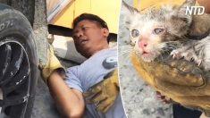 Gato preso dentro de caminhonete é resgatado por família comovida
