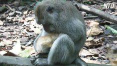 Turista vê macaco embalando algo – quando ela olha mais de perto algo mágico acontece