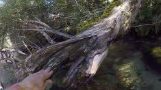 Homem resgata passarinho preso em corda no rio