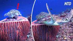 Tartaruga marinha vê alguém cochilando em seu lugar, mas sua expressão irritada é hilariante!