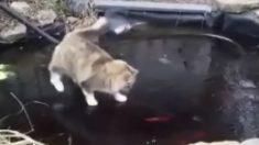 Gato tenta desesperadamente pegar peixes nadando em lagoa congelada