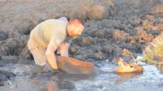 Homem resgata impala atolada em um enorme poço de lama – por pouco ela não escapa