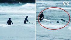 Leões-marinhos perseguem surfistas em praia da Nova Zelândia