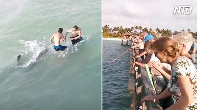 Pescador quase entra em colapso tentando puxar peixe grande – mas ele é criativo e acaba atraindo uma multidão