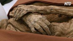 Múmia é ancestral de político britânico – a descoberta impressionou o mundo