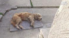 Cão vadio entra em casa e encontra ajuda que muda sua vida