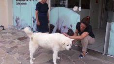 Cão refaz caminhada diária que costumava fazer com seu dono falecido por mais de um ano