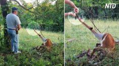 Homem salva cervo que estava preso em cerca