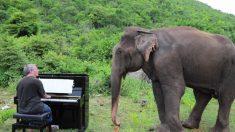 Elefanta cega começa a 'dançar' quando pianista toca Bach