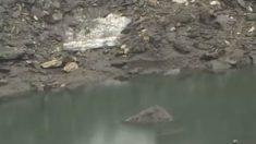 Lago cheio de esqueletos causa espanto na Índia