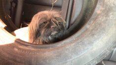 Motorista comovido com situação de três cães abandonados chama grupo de socorristas compassivos