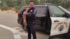 """Cervo filhote é resgatado no incêndio na Califórnia e """"beija""""o policial para agradecer sua gentileza"""