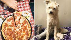 Cadela faminta 'rouba' fatia de pizza e leva para alimentar seus 6 filhotes
