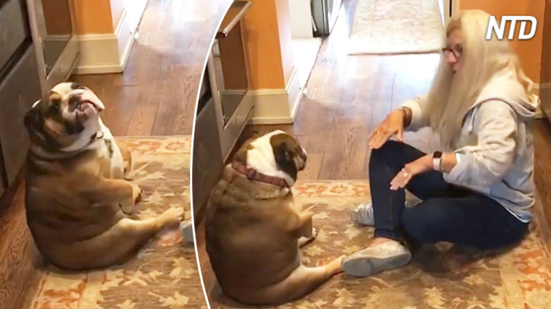 Cães dançam coreografias incríveis com seus donos