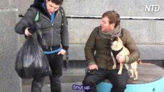 Experimento social: homem chuta filhote de cachorro em saco de lixo para aumentar a conscientização contra a crueldade animal
