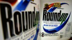 Monsanto é condenada a pagar US$ 289 milhões em processo judicial (vídeo)