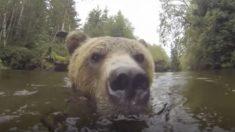 Urso selvagem chega bem perto de pessoas dentro de lago