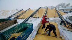 Incêndios nas reservas de grãos da China podem ter sido provocados para evitar inspeções do Estado