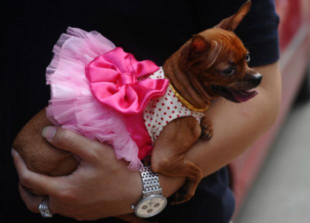 Cães como animais de estimação em Hanói (Hoang Dinh Nam/AFP/Getty Images)