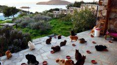 Emprego dos sonhos: vaga para babá de gatos em ilha grega atrai centenas de internautas