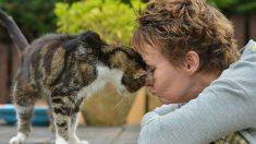 Gato desaparecido volta para casa após 13 anos e surpreende