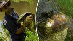 Astro do Youtube tira anzol preso em mandíbula de tartaruga