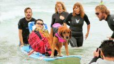 Cadela terapeuta cura corações e almas surfando com crianças que não podem andar, comer ou respirar