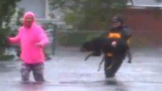Repórter ajuda vítima do furacão Florença a levar cão de terapia para longe das enchentes
