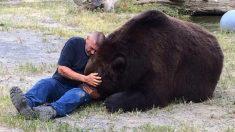 Jimbo, o urso Kodiak, falece após 20 anos de vida familiar
