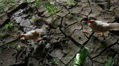 China enfrenta crise de abastecimento de alimentos e é prejudicada pelas tarifas que impôs aos EUA
