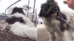 Equipes de resgate fazem malabarismos para resgatar cães de rua