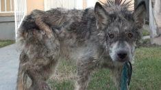 Cachorro abandonado é confundido com logo mas teste de DNA revela sua raça