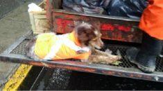 """Cachorra de rua """"trabalha"""" coletando lixo com seu dono"""
