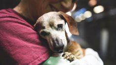 Fotógrafo publica fotos de dachshund velho antes dele ser sacrificado e algo incrível acontece