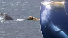 Cachorro e golfinho nadam e brincam juntos na água por horas todos os dias