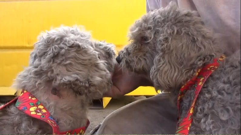 Casal de cães desabrigados é resgatado em ferro-velho